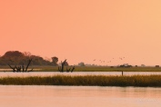 A more saturated view of an early sunset over Puku Flats along the Chobe River.