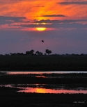 Silhouette over the Chobe River