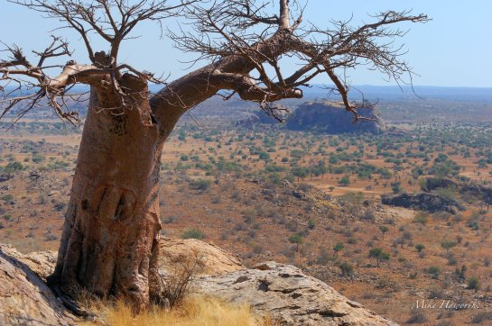 Looking down on a sacred hill from Rhodes Baobab in Mashatu.