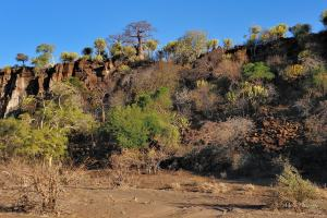 The view from a dry river bed in Mashatu - Baobabs , Euphorbias and peace