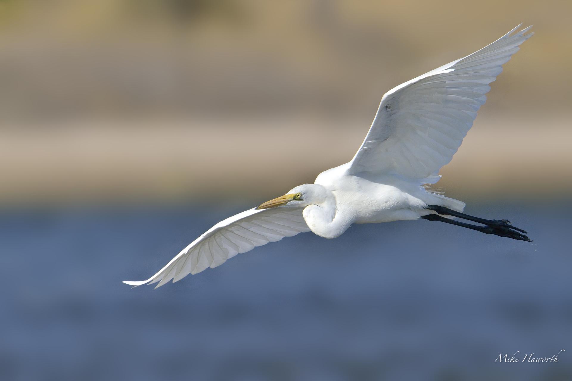 Chobe Photography \u2013 flying birds Howie\u002639;s Wildlife Images