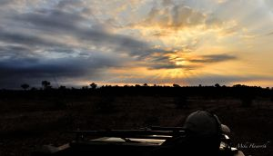 Dawn in Mashatu starting out on a game drive from Eagle's Nest in Mashatu