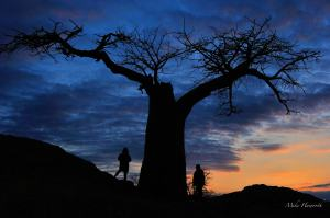 Two Haworth girls up at Rhodes Baobab at sunset in Mashatu