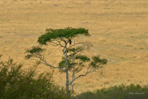 Photographic safari with Coetzer Nature Photography