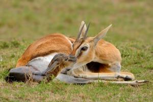 Photographic safari with Coetzer Nature Photography