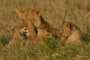 Play time in the Mara