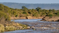 One relatively flat crossing point on the Mara river, but don't be fooled there are some huge croc just downstream of the rapids - watching and waiting