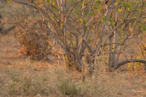 Photographic safari with Jerry Haworth