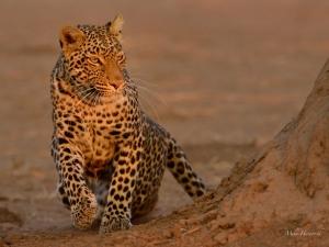 Photographic safari with Jerry Haworth