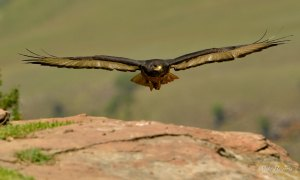 Photographic trip to Giant's Castle Vulture Hide with Helen