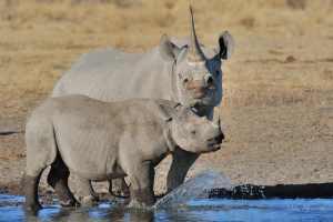 Rhino10