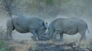 Rhino17