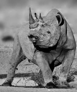 Rhino27