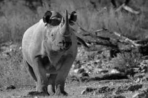 Rhino28
