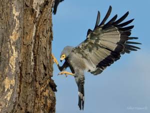 Chobe river wildlife  photography