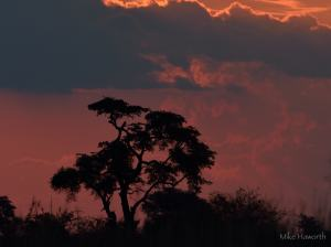 Chobe river wildlife  photography