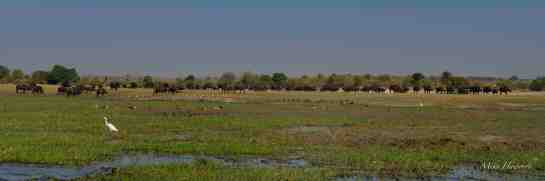 Chobe PM 10-Aug-14 2116