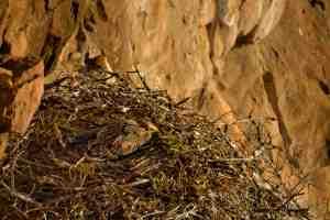 Eagle's Rock AM 23-Aug-14 4544