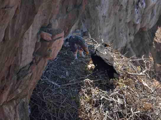 Eagle's Rock AM 24-Aug-14 4658