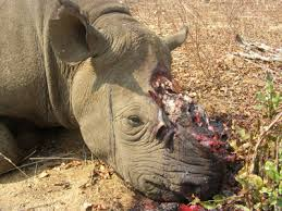rhino-poaching3