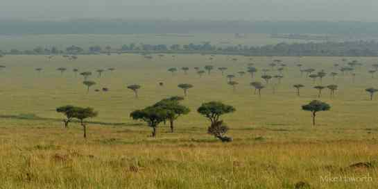 Photographic safari in Masai Mara,Kenya