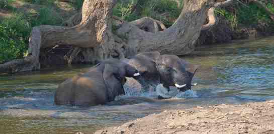 Mashatu,Botswana