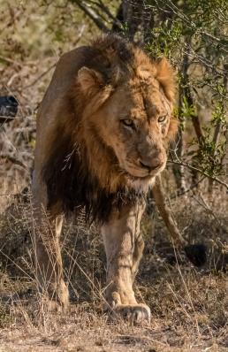 Timbavati,South Africa