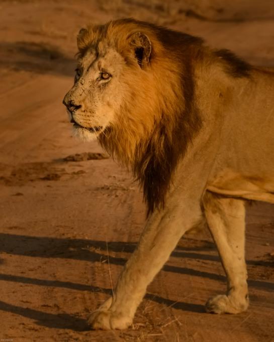 Bothaville,South Africa -----------------Shooting data--------------------------- 1/1/6400, f7.1, iso2500, 240mm
