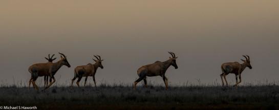 Photographic safari in Masai Mara,Kenya -----------------Shooting data--------------------------- 1/1/5000, f9, iso800, 600mm