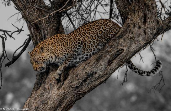Photographic safari in Masai Mara,Kenya -----------------Shooting data--------------------------- 1/1/1250, f8, iso800, 600mm