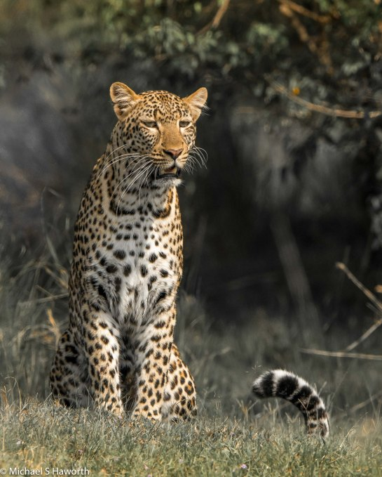 Photographic safari in Masai Mara,Kenya -----------------Shooting data--------------------------- 1/1/3200, f10, iso800, 600mm