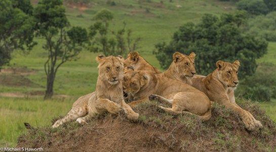 Photographic safari in Masai Mara,Kenya -----------------Shooting data--------------------------- 1/1/100, f8, iso1000, 180mm