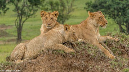 Photographic safari in Masai Mara,Kenya -----------------Shooting data--------------------------- 1/1/125, f9, iso1000, 260mm