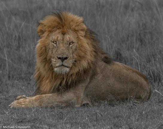 Photographic safari in Masai Mara,Kenya -----------------Shooting data--------------------------- 1/1/400, f9, iso2000, 400mm