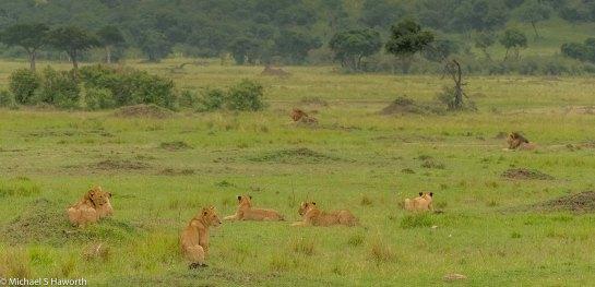 Photographic safari in Masai Mara,Kenya -----------------Shooting data--------------------------- 1/1/640, f11, iso2000, 210mm
