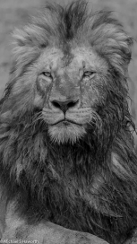 Photographic safari in Masai Mara,Kenya -----------------Shooting data--------------------------- 1/1/800, f7.1, iso640, 380mm