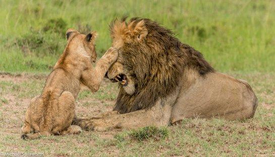 Photographic safari in Masai Mara,Kenya -----------------Shooting data--------------------------- 1/1/640, f8, iso640, 400mm