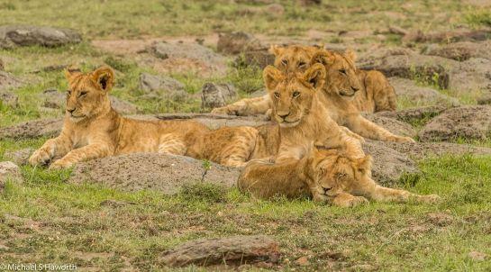Photographic safari in Masai Mara,Kenya -----------------Shooting data--------------------------- 1/1/160, f16, iso1600, 400mm