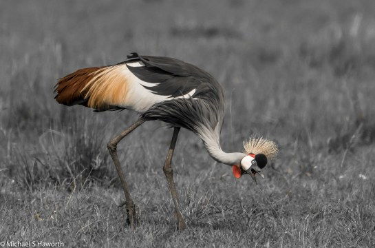 Photographic safari in Masai Mara,Kenya -----------------Shooting data--------------------------- 1/1/8000, f6.3, iso500, 600mm