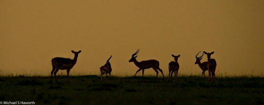 Photographic safari in Masai Mara,Kenya -----------------Shooting data--------------------------- 1/1/2500, f5, iso800, 600mm