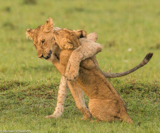 Photographic safari in Masai Mara,Kenya -----------------Shooting data--------------------------- 1/1/800, f7.1, iso800, 600mm