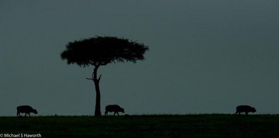 Photographic safari in Masai Mara,Kenya -----------------Shooting data--------------------------- 1/1/8000, f8, iso800, 600mm