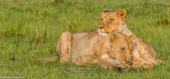 Photographic safari in Masai Mara,Kenya -----------------Shooting data--------------------------- 1/1/200, f20, iso1600, 400mm