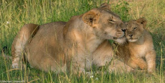 Photographic safari in Masai Mara,Kenya -----------------Shooting data--------------------------- 1/1/1000, f16, iso1250, 600mm