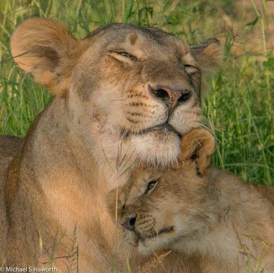 Photographic safari in Masai Mara,Kenya -----------------Shooting data--------------------------- 1/1/800, f16, iso1250, 600mm