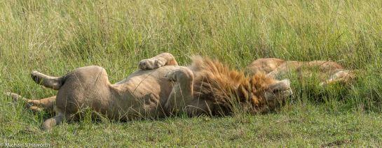 Photographic safari in Masai Mara,Kenya -----------------Shooting data--------------------------- 1/1/1250, f10, iso1000, 165mm