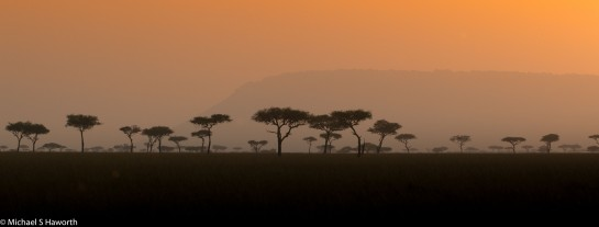 Photographic safari in Masai Mara,Kenya -----------------Shooting data--------------------------- 1/1/500, f18, iso1000, 140mm