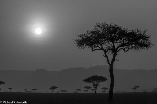 Photographic safari in Masai Mara,Kenya -----------------Shooting data--------------------------- 1/1/800, f25, iso1000, 140mm