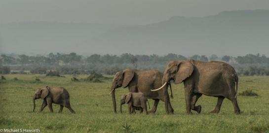 Photographic safari in Masai Mara,Kenya -----------------Shooting data--------------------------- 1/1/640, f13, iso640, 230mm