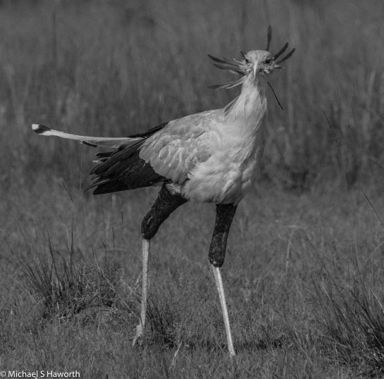 Photographic safari in Masai Mara,Kenya -----------------Shooting data--------------------------- 1/1/4000, f14, iso800, 850mm